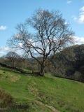 Traccia antica lungo un alto pendio di collina nel paesaggio della pennina con il muro a secco ed albero sull'itinerario di vecch Fotografie Stock