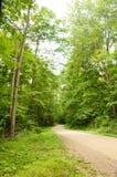 Traccia attraverso gli alberi Immagini Stock