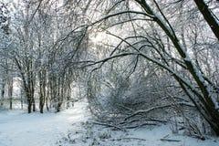 Traccia attraverso il terreno boscoso nevoso fotografia stock libera da diritti