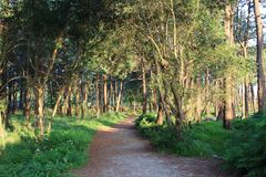 Traccia attraverso la foresta fotografie stock