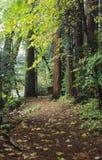 Traccia attraverso la foresta di autunno in Yosemite Immagini Stock