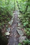 Traccia attraverso la montagna boscosa fotografia stock libera da diritti