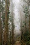 Traccia attraverso una foresta dell'eucalyptus inghiottita in nebbia, San Pedro Valley County Park, area di San Francisco Bay, Ca immagini stock