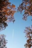 Traccia bianca degli aerei nel cielo blu sopra i wi dei rami fotografie stock