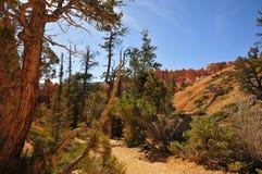Traccia in Bryce Canyon NP Fotografia Stock