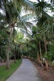Traccia con una tettoia della palma Fotografia Stock Libera da Diritti