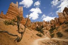 Traccia del canyon di Bryce immagine stock