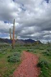 Traccia del deserto Fotografia Stock