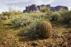 Traccia del deserto della regione selvaggia Immagini Stock Libere da Diritti