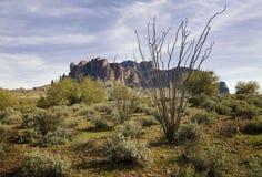 Traccia del deserto della regione selvaggia Fotografia Stock