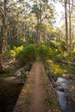 Traccia del fiume di Delatite al Mt Buller Fotografia Stock Libera da Diritti
