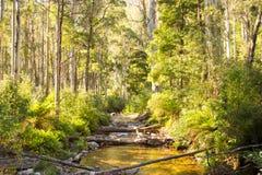 Traccia del fiume di Delatite al Mt Buller Immagini Stock Libere da Diritti