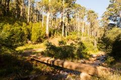 Traccia del fiume di Delatite al Mt Buller Fotografie Stock Libere da Diritti