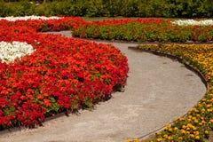 Traccia del giardino di fiore Immagini Stock