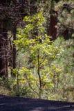Traccia del lago bismarck in Arizona del Nord Fotografia Stock Libera da Diritti