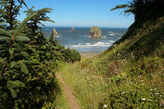 Traccia del litorale dell'Oregon Immagine Stock