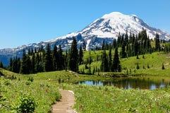 Traccia del picco di Naches, prati alpini di fioritura & il monte Rainier, WA Immagini Stock Libere da Diritti