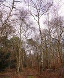 Traccia del terreno boscoso a gennaio fotografia stock libera da diritti