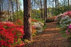 Traccia del terreno boscoso, giardini di Callaway, GA Immagine Stock