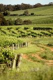 Traccia del vino Fotografia Stock