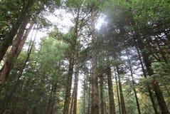 Traccia dell'albero alto! fotografia stock