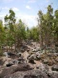 Traccia della baia della primavera in Saba Fotografia Stock