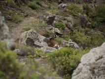 Traccia della baia della primavera, Saba Fotografie Stock Libere da Diritti