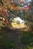 Traccia della bici di paese delle fate di caduta alla riserva di Chamna, Richland, WA immagini stock libere da diritti