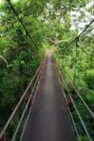 Traccia della camminata sopra l'albero Immagini Stock