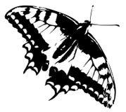 Traccia della farfalla Immagine Stock