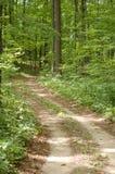 Traccia della foresta Fotografia Stock Libera da Diritti
