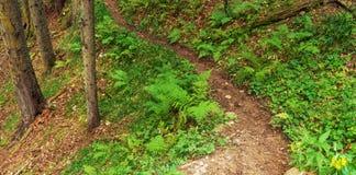 Traccia della foresta Immagini Stock