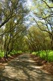 Traccia della foresta Fotografia Stock