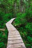 Traccia della foresta in foresta pluviale sull'isola di Vancouver Fotografia Stock