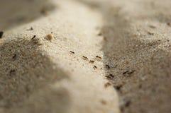 Traccia della formica Immagini Stock Libere da Diritti