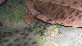 Traccia della formica in una foresta archivi video