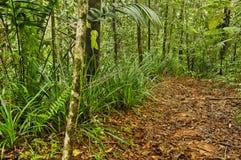 Traccia della giungla, Costa Rica Fotografia Stock Libera da Diritti