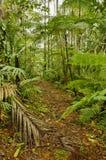 Traccia della giungla, Costa Rica Immagine Stock