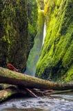 Traccia della gola di Oneonta nella gola del fiume Columbia, Oregon Immagine Stock