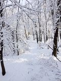 Traccia della neve Fotografie Stock Libere da Diritti