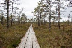 Traccia della palude con gli alberi intorno Immagini Stock Libere da Diritti