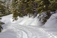 Traccia della racchetta da neve e piste fresche attraverso la foresta Immagine Stock