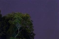 Traccia della stella Fotografie Stock