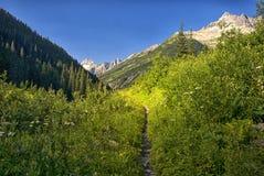 Traccia della valle di Asulkan, Rogers Pass, Columbia Britannica Canada Fotografia Stock