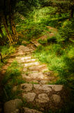Traccia delle scala in Muir della riserva naturale nazionale di Dinnet in Scozia Fotografia Stock Libera da Diritti