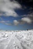 Traccia dello Snowy Immagini Stock Libere da Diritti