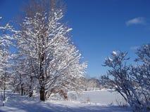 Traccia dello Snowy Immagine Stock Libera da Diritti