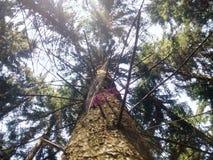 Traccia di Autumn Forest Tall Trees della natura Legno verde di luce solare Fotografie Stock