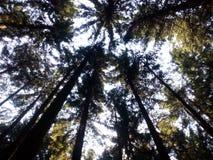 Traccia di Autumn Forest Tall Trees della natura Legno verde di luce solare Immagini Stock Libere da Diritti