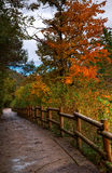 Traccia di autunno. Fotografia Stock